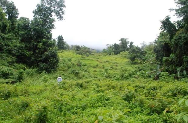 Superata la collina si trovano alcune piantagioni di ganja